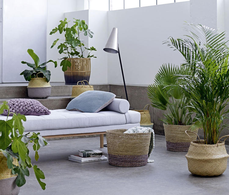Garten feeling im wohnzimmer gr ne oase for Wohnzimmer mit pflanzen